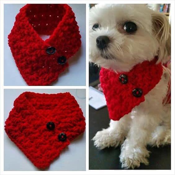 cachorro com cachecol bandana de lã