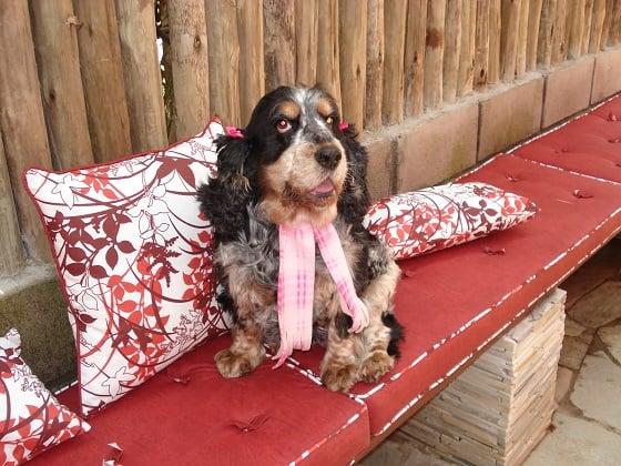 cachorro com cachecol rosa