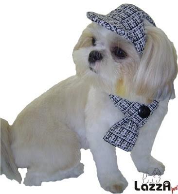 cachorro combinando cachecol e bone